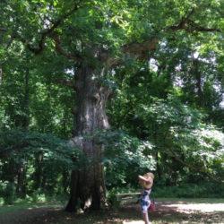 brandywine-creek-state-park-forest